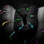 Что одеть на Год змеи