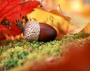 Что кушать осенью?