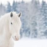 Новый год лошади 3
