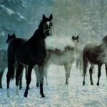 Новый год лошади 2